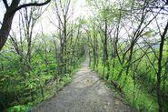 Wolmyeongdong-hiking-trail-8