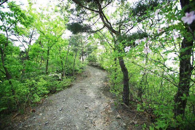 File:Wolmyeongdong-hiking-trail-7.jpg