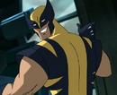 Wolverine profile