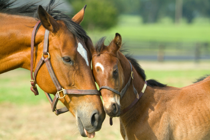 File:Mare and cute foal.jpg