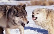 Sam fighting with shelby