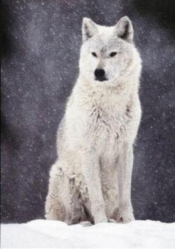 Onepeaceweleyswolfform
