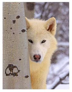 Blizzy-wolf
