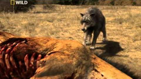 Prehistoric Predators Dire Wolf