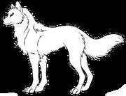 Волчица модель