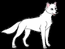 Моделька волк самец