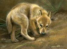Shy-WolfPuppy