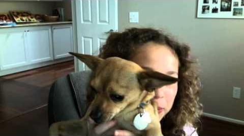 Blog 1 Taco Video