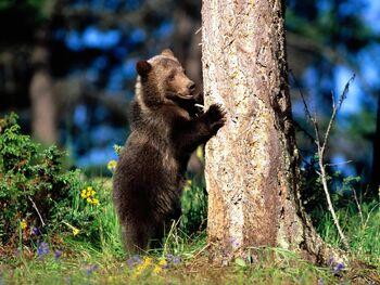 Bear Hug Grizzly Bear Cub-1600x1200A