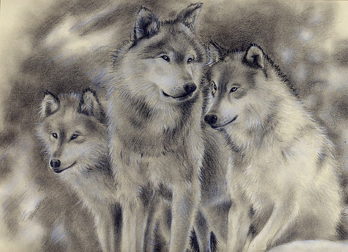 File:Wolf Family.SOLD.jpg