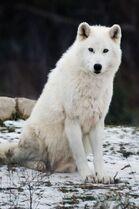 http://ru.wolvesofthebeyond.wikia