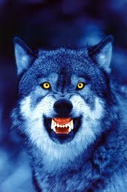Vyrrwolf