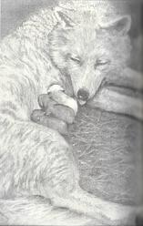 Lonewolfjpnart1