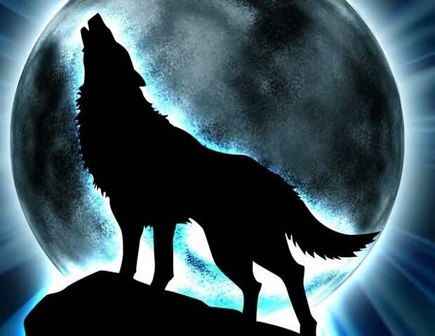 File:Wolf howling at the moon.jpeg