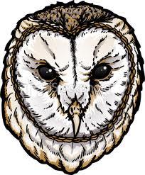File:My owl pic.jpg