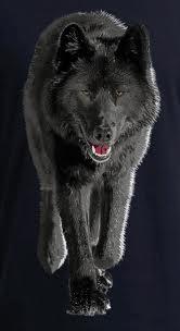 Aawolf6
