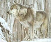 AlaskanTwolf6