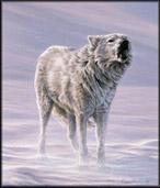 Articwolf
