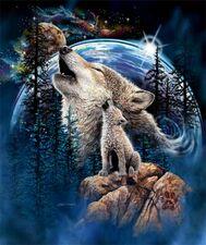 Cute wolf my fav