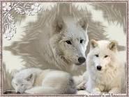 Articwolf8