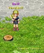Common Grass 8