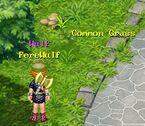 Common Grass 11