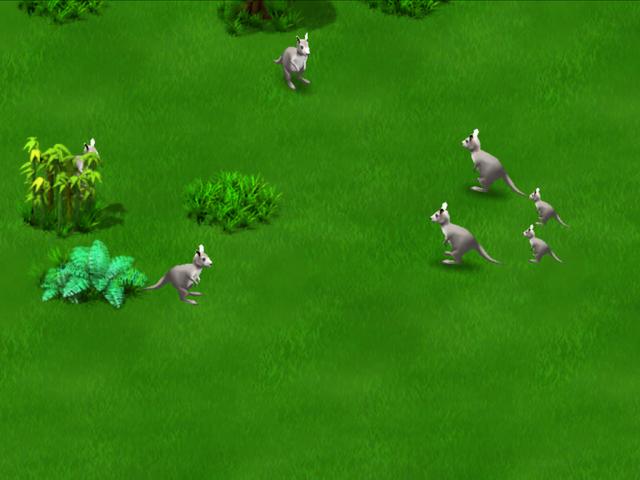 File:Grey Kangaroo.PNG