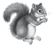 Illustration Holly 2