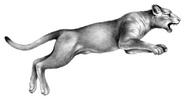 Illustration Carag 5