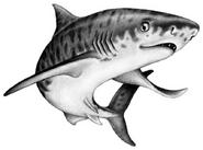 Illustration Tiago 1