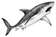 Illustration Tiago 2