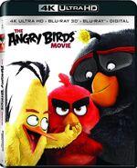 Angrybirdsmovie 4k