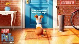 The Secret Life Of Pets - Official Teaser Trailer (HD) - Illumination