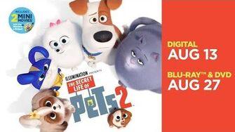 The Secret Life of Pets 2 Trailer Own it now on 4K, Blu-ray, DVD & Digital