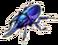 Tricorn beetle