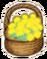 Mallee flower