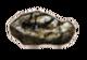 Half-beast Torso