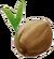 Coconut (L)