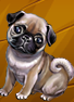 Collection-Pug