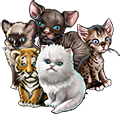 Collection-Kitten Set