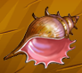 Collection-Shell