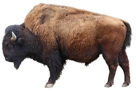 File:Bison.png