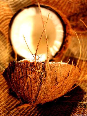 Coconut art 06