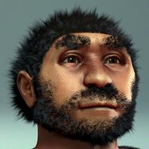 440px-Homo erectus pekinensis - archeaeological