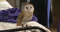Cynthia Horrocks owl.png