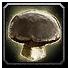 Inv mushroom 13