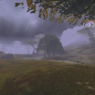 Болотина в дождливую погоду
