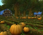 Brackwell Pumpkin Patch