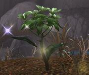 Silkweed
