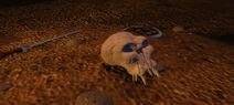 Skull discarded